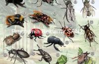 nowy plakat -owady-mała