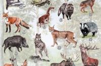 nowy plakat zwierzęta-mała