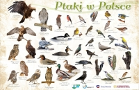 PTAKI W POLSCE copy