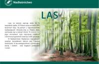 las-puszcza1