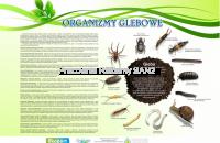 organizmy glebowe