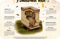 BUDOWA-ULA