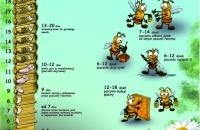 pszczoła-rozwój