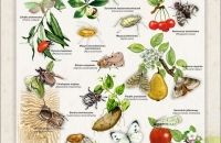 owady szkodliwe