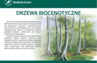 drzewa biocenotyczne